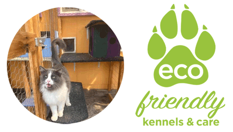 Cat-habitat-Eco-Friendly-Kennels-and-Care